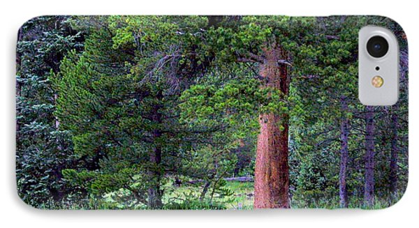 Pine At Rocky Mountain National IPhone Case by Larry Capra