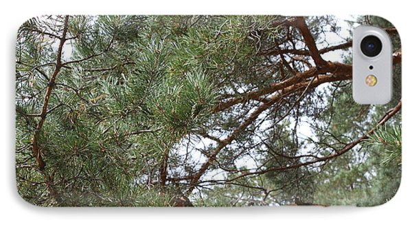 Pine Branches Phone Case by Evgeny Pisarev