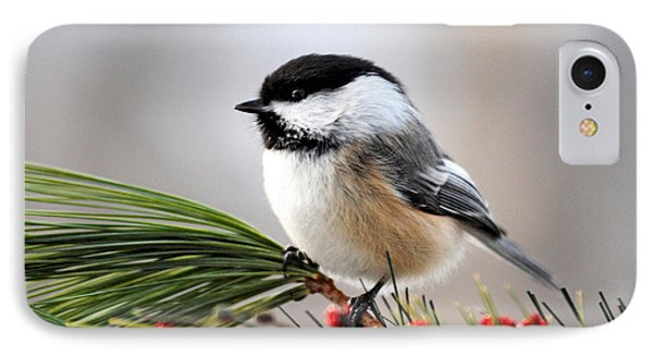 Pine Chickadee IPhone 7 Case by Christina Rollo