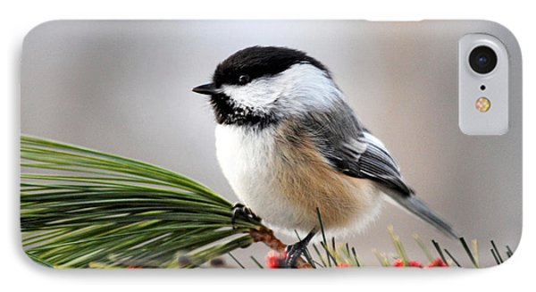 Pine Chickadee IPhone Case