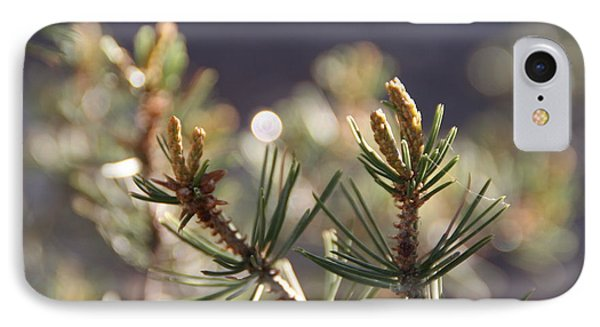 IPhone Case featuring the photograph Pine by David S Reynolds
