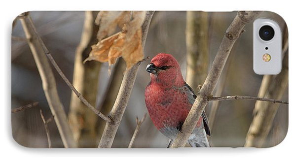 IPhone Case featuring the photograph Pine Grosbeak by David Porteus