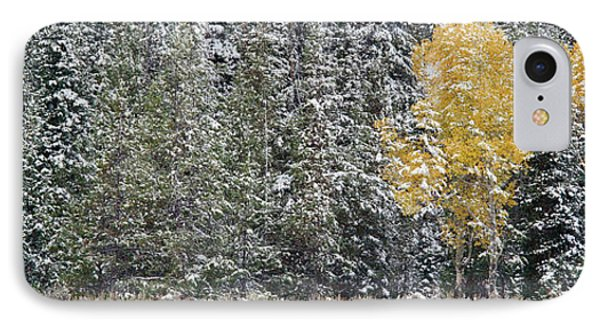 Pine Trees In A Forest, Grand Teton IPhone Case by Panoramic Images