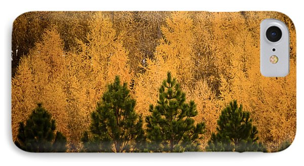 Pine Trees Phone Case by Tim Hester