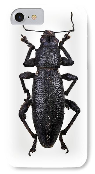 Pine Weevil IPhone Case by F. Martinez Clavel