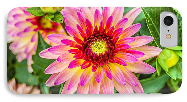 Pink And Purple Blooms IPhone Case by Alan Marlowe