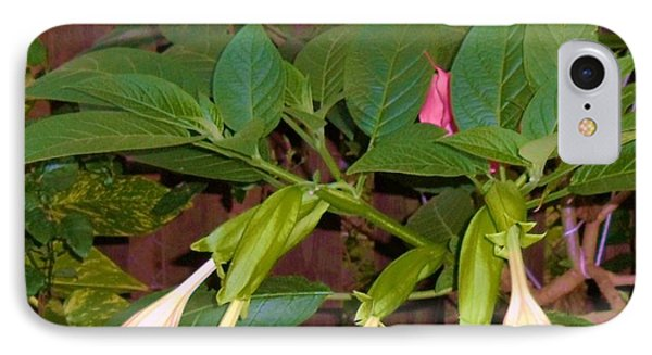 Pink And White Angel's Trumpet Flowers Phone Case by Trudy Brodkin Storace