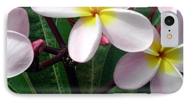 Pink And Yellow Plumeria IPhone Case by Karen Nicholson