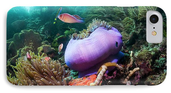 Pink Anemonefish With Magnificent Anemone IPhone Case by Georgette Douwma