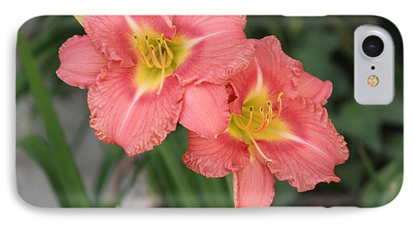 Pink Asiatic Lily IPhone Case by Allan Levin
