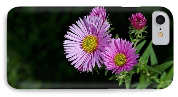 IPhone Case featuring the photograph Pink Asters On Black by Maria Janicki