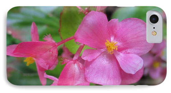 Pink Begonias IPhone Case by Barbara Yearty