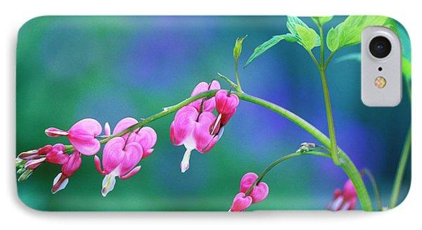 Pink Bleeding Hearts In Garden IPhone Case by Jaynes Gallery