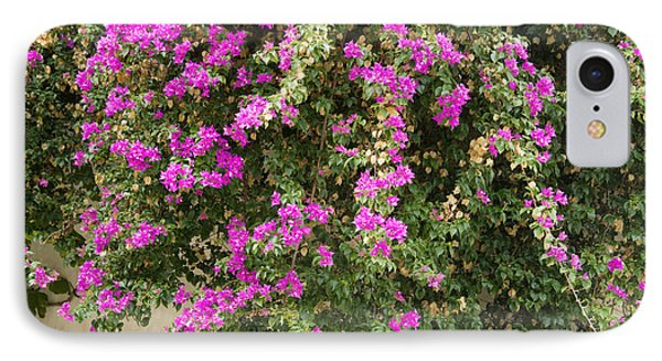 Pink Bougainvillea Growing On Wall IPhone Case by Rosemary Calvert