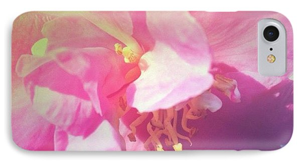 Pink Camellia Vintique Edit IPhone Case by Anna Porter