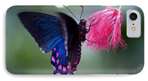 IPhone Case featuring the photograph Pink Cattleheart Butterfly by Zoe Ferrie