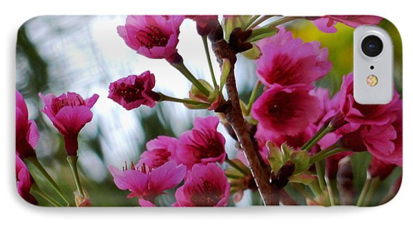 Pink Cherry Blossoms IPhone Case by Pamela Walton