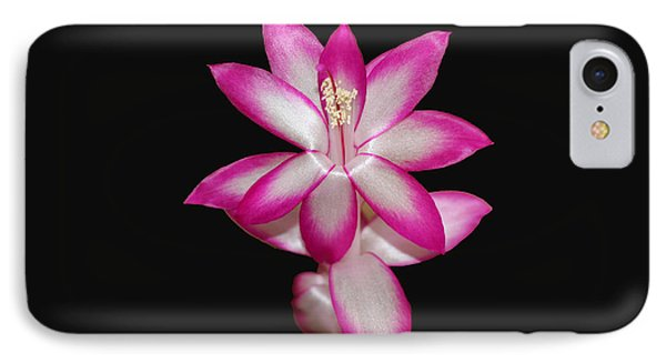 Pink Christmas Cactus On Black Phone Case by Michael Waters
