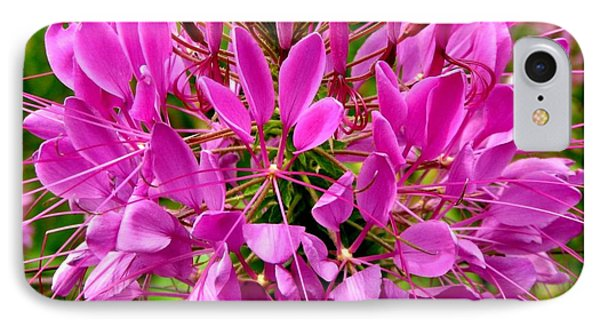 Pink Cleome Flower Phone Case by Rose Santuci-Sofranko