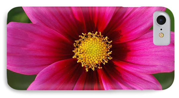 Pink Cosmos Phone Case by Kathleen Struckle