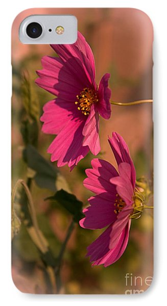 IPhone Case featuring the photograph Pink Cosmos  by Marjorie Imbeau