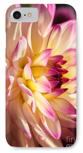 Pink Cream And Yellow Dahlia IPhone Case by Olivia Hardwicke