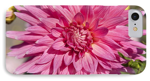 Pink Dahlia II Phone Case by Peter French