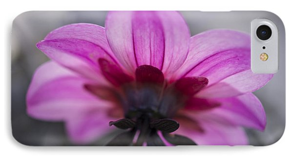 Pink Dahlia IPhone Case by Priya Ghose