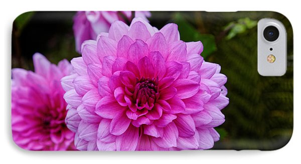 Pink Dahlias IPhone Case