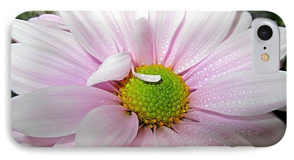Pink Daisy Freshness With Water Droplets Phone Case by Danielle  Parent