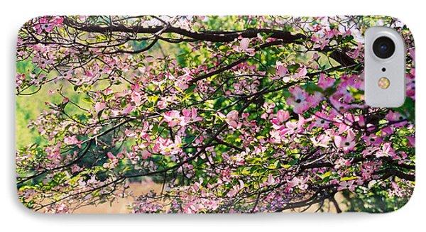 Pink Dogwood I IPhone Case