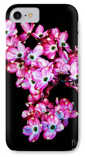 Pink Dogwood IPhone Case by Robert Bales
