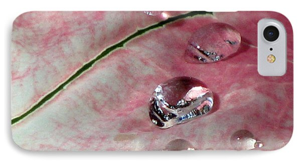 Pink Fancy Leaf Caladium - September Tears IPhone Case by Pamela Critchlow