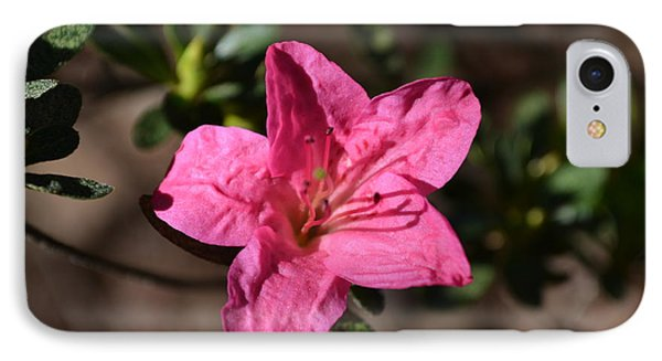IPhone Case featuring the photograph Pink Flower by Tara Potts