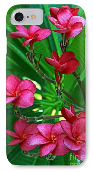 Pink Frangiapani - Plumeria IPhone Case by Larry Nieland