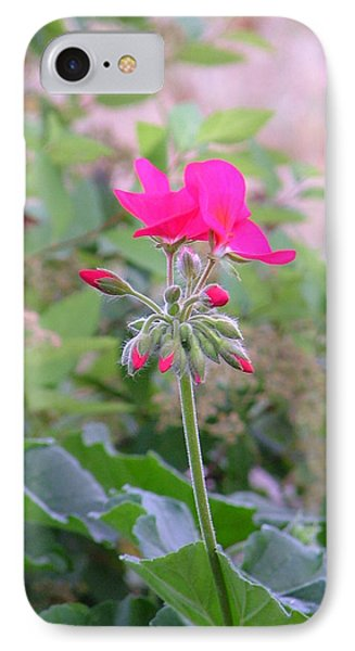 Pink Geranium IPhone Case by Natasha Denger