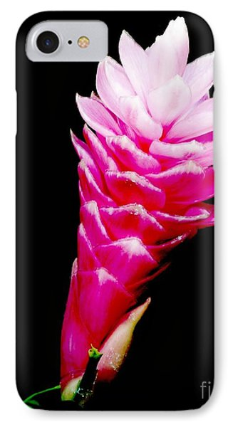 Pink Ginger Lilly IPhone Case by Amar Sheow