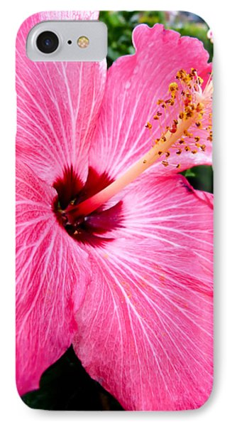 Pink Hibiscus IPhone Case by Pete Trenholm