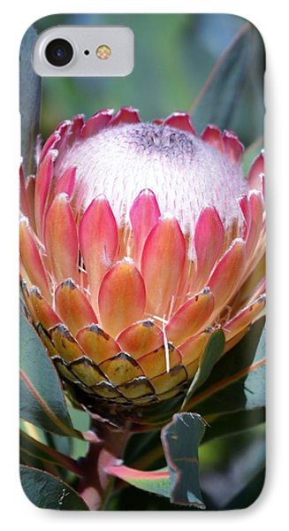 Pink Ice Protea IPhone Case by Werner Lehmann
