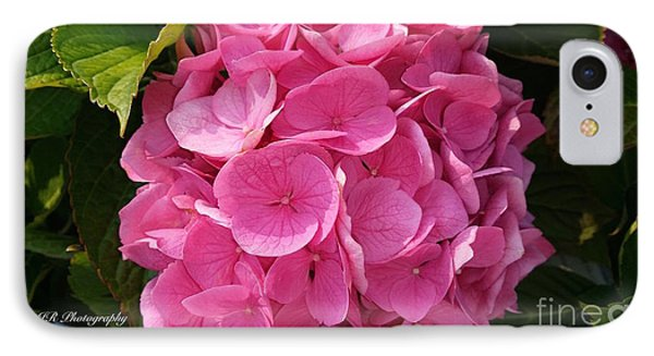 IPhone Case featuring the photograph Blushing Rose by Jeannie Rhode