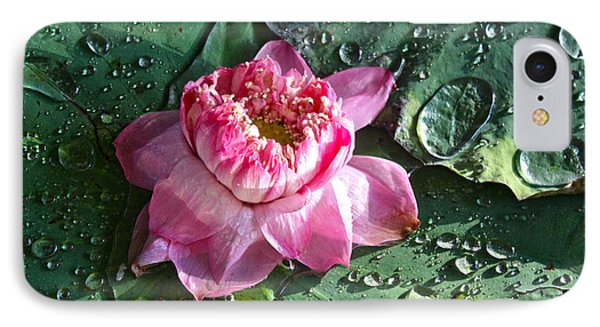 Pink Lotus Flower IPhone Case by Venetia Featherstone-Witty