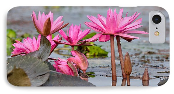 Pink Lotuses IPhone Case by Fotosas Photography