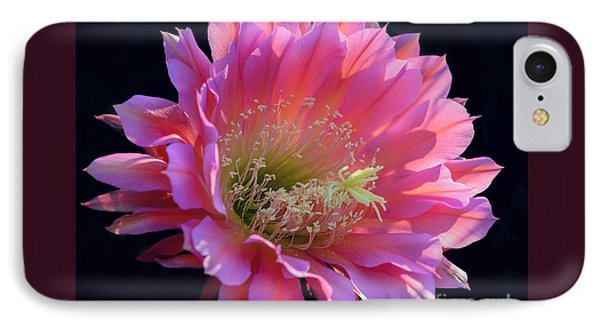 Pink Night Blooming Cactus Flower IPhone Case