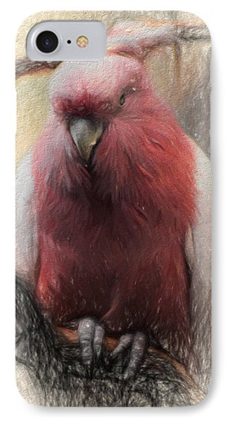 Pink Painted Parrot IPhone Case by Terry Cork
