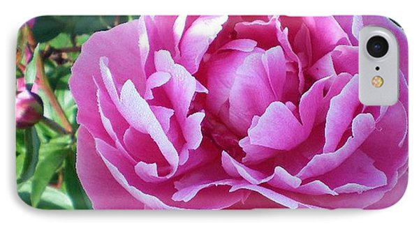 Pink Peony IPhone Case by Barbara Griffin