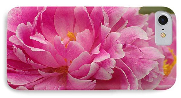 IPhone Case featuring the photograph Pink Peony by Suzanne Powers