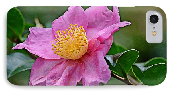 IPhone Case featuring the photograph Pink Petals by Linda Brown