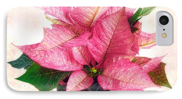 Pink Poinsettia IPhone Case by Louise Kumpf