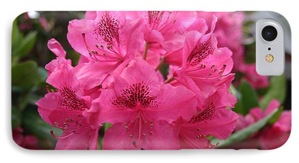 Pink Rhododendron Bloom IPhone Case
