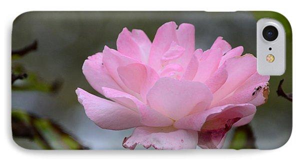 The Last Rose IPhone Case by Debra Martz